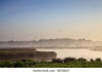 Morning landscape with lots of birds at a lake