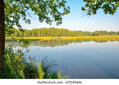 Morning landscape of nature. Pond with green plants.
