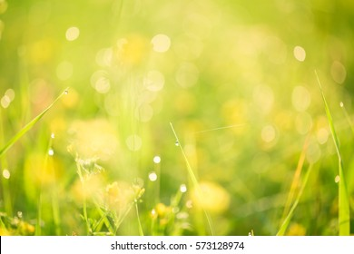 Morning landscape sunrise in the meadow, on the grass and flowers of the drops of dew. The idea of the background of Mother's day, 8 March and World environment day. Soft focus.