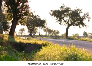 Morning landscape with trees in sunshine.