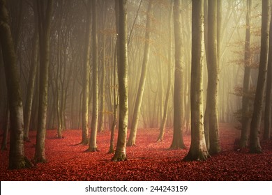Morning light in enchanted forest