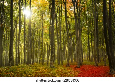 Morning light in the forest during autumn
