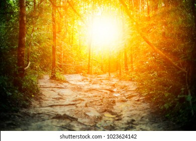 Morning light in the forest. With lush green foliage Nature is full of mysterious and terrifying rainforest backgrounds.