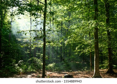 Morning Light Glows Through Kentucky Forest in early summer