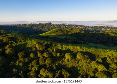 Morning light illuminates the hills surrounding San Francisco Bay. A wet winter has caused lush vegetation growth in the East Bay hills near Oakland and Berkeley.