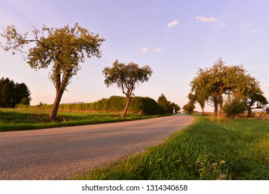 Morning light landscape with road.