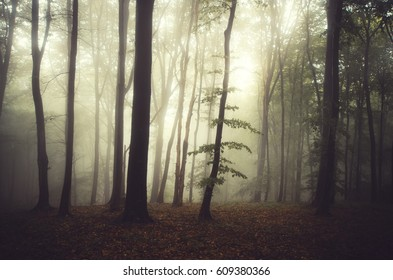 morning light in misty forest