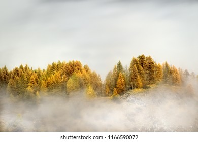morning light on autumnal trees on french alps