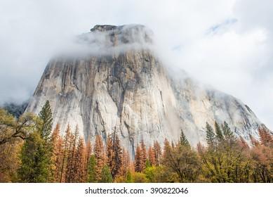Morning light on El Capitan - Yosemite National Park