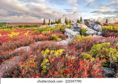 Morning light over autumn foliage at Bear Rocks Preserve in West Virginia's Dolly Sods.
