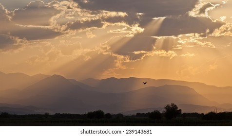 Morning light over the mountains and is the same bird