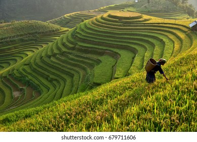 Morning Light of rice field on terrace in Vietnam Landscape.