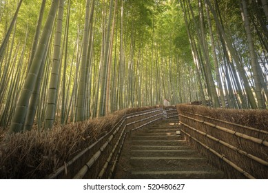 Morning light scene of Sagano bamboo forest at Arashiyama, Tokyo, Japan. This bamboo forest is the most attraction of Arashiyama.