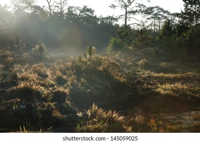 Morning light shines on the forest at Phu Kradueng National Park, Thailand.