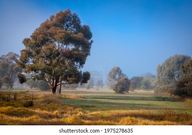 Morning mist between the trees across green fields and yellow scrub. Parks, New South Wales, Australia.