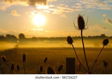 Morning Mist Meadow