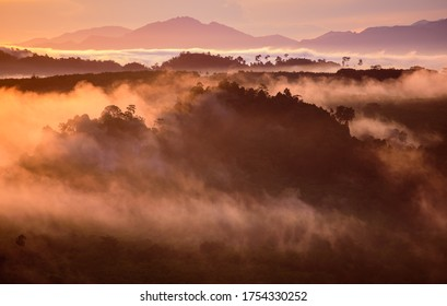 Morning mist in mountain forests.