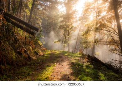 Morning mist on a tree lined mountain trail