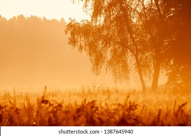 morning mist over a field in the sunrise