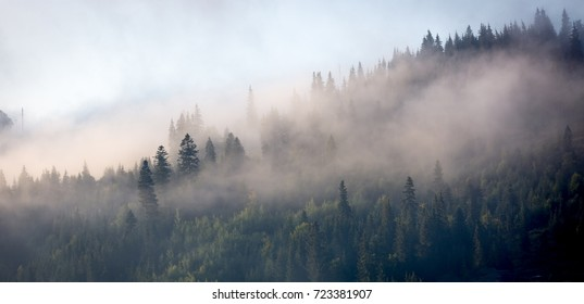 morning mist over mountain forest