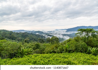 Morning mist over the rainforest in Sabah, Malaysia