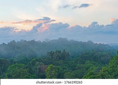 Morning Mist Rising Out of the Amazon Rainforest near Alta Floresta, Brazil