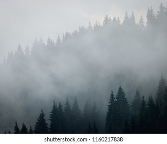 Morning mist rolling through a forest