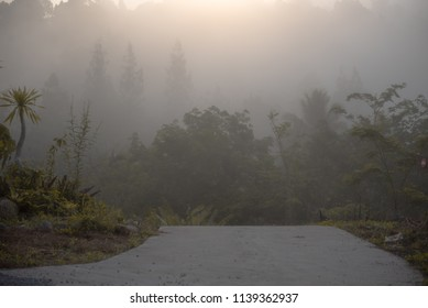 Morning mist with sun