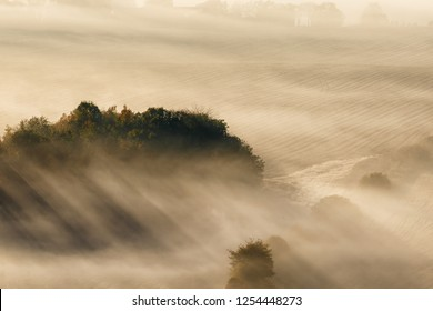 Morning mist with sun rays over the grove of trees on the field