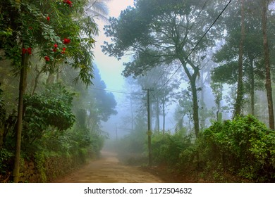 Morning mist with trees and greenery on the hill in fog showing narrow path of electrified village from Thekkedy,Idukki district,Kerala,India