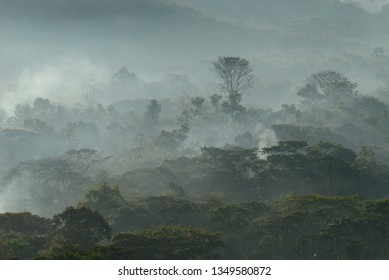 Morning mistical fog over the native forest of the Huayabamba Valley in Amazonas.