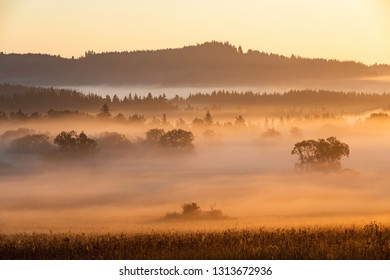 Morning mists in the Bohemian Forest, fogs lit by morning sun tinted orange. Summer landscape in fog, Sumava, Czech Republic. Morning fog in Sumava, south Bohemia landscape