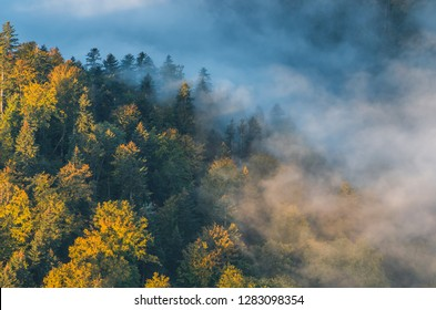 Morning mists and colorful autumn forest landscape in the mountains