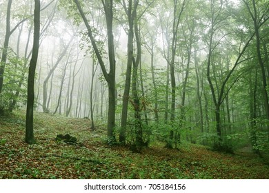 Morning in misty summer forest.