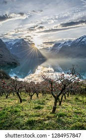 Morning mood and the first sun beams approaching the apple trees in the garden . Photo from Flo in Oppstryn , in Norway .