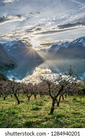 Morning mood in a garden full of apple trees . Photo from Flo in Oppstryn , in Norway .