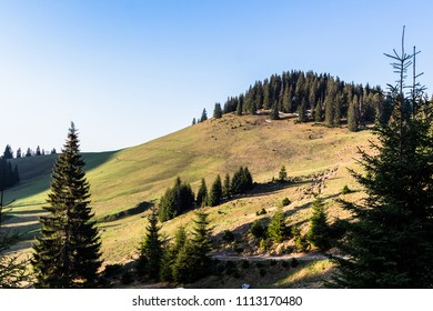 Morning in mountains with pine trees