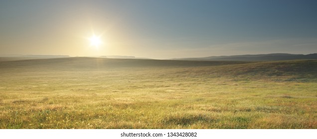 Morning nature meadow landscape. Spring flowers. Calm scene.