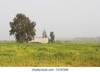 morning on  farm