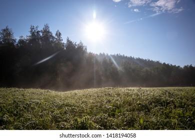The morning on siberian field