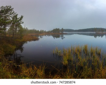 morning on the swamp lake. Leningrad region. Russia