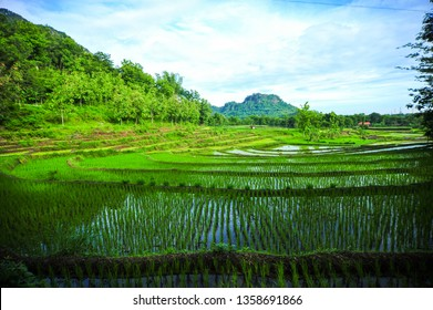 morning paddy field and mountain