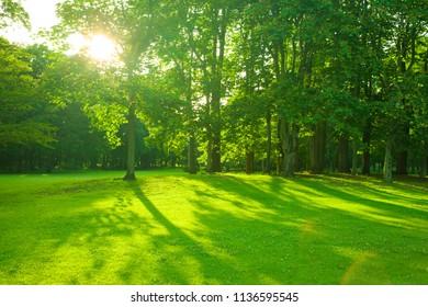 morning park , shade of trees