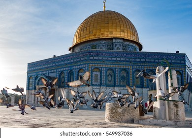 The morning pigeons of Al-Aqsa, seen flying at the courtyard of the Dome of Rock, in the old city of Jerusalem, Palestine/Israel.
