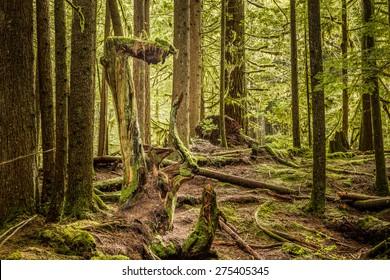 Morning in rain forest, British Columbia, Canada.