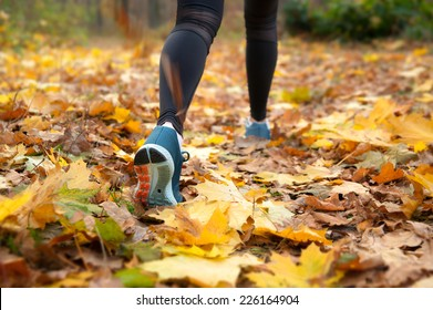Morning run in the autumn woods