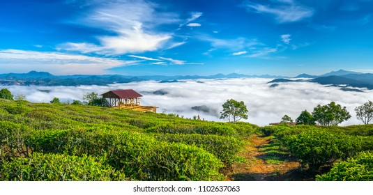 The morning scenery on the hillside of tea planted in the misty highlands below the beautiful valley