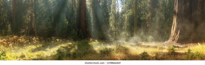 Morning in Sequoia National Park, California, USA