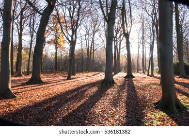 Morning shadows in autumn forest