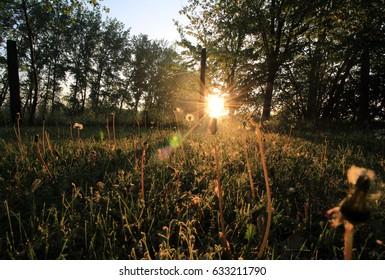 Morning shine